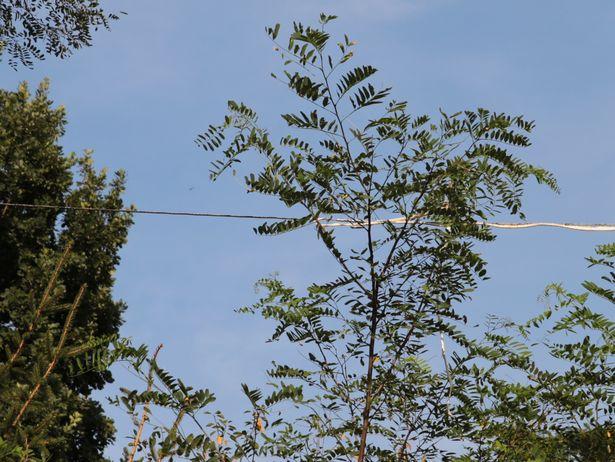 Оголенный электрический кабель провисает над территорией ясли-сада. Фото: Дмитрий Макаревич.