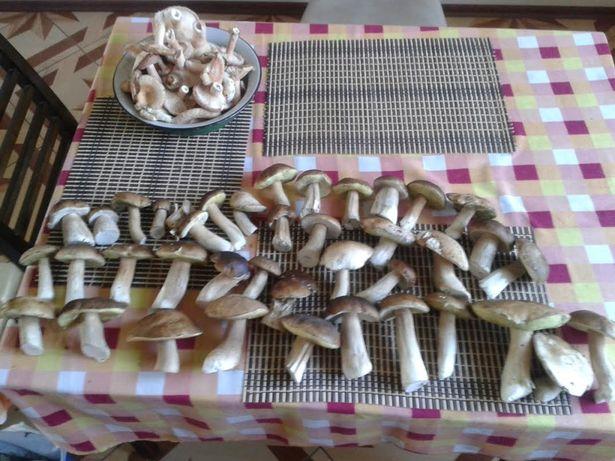 40 боровиков и один мухомор. Фото: Юлия ПОЛУЯНЧИК