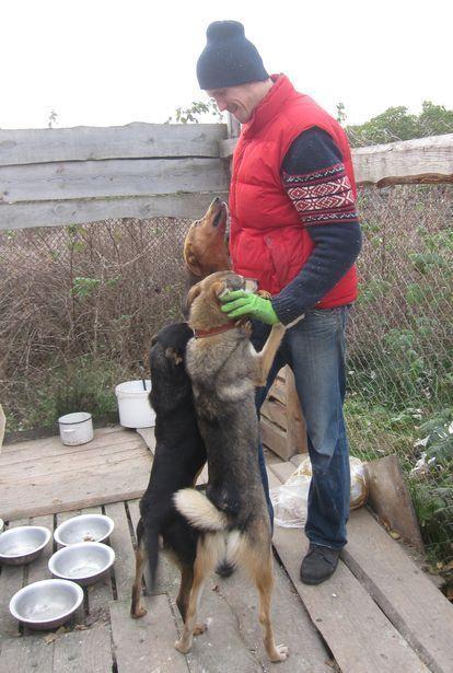 Каждая собака хочет, чтобы ее погладили. Фото: Ольга ШИРОКОСТУП