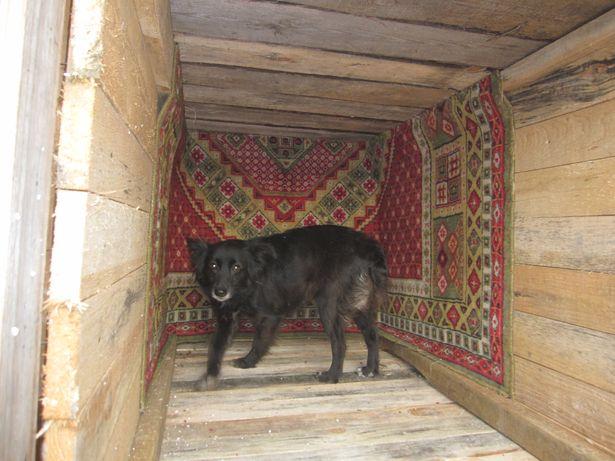 Питомец приюта облюбовал новое жилище. Фото: Ольга ШИРОКОСТУП