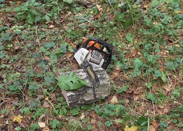 Бензопила, найденная на месте происшествия. Фото межрайонной Барановичской инспекции охраны животного и растительного мира при президенте РБ.