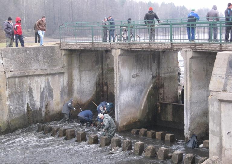 Лов рыбы на старой дамбе. Рыбаки используют  и багры – запрещенные орудия лова. Фото: Татьяна НЕКРАШЕВИЧ.