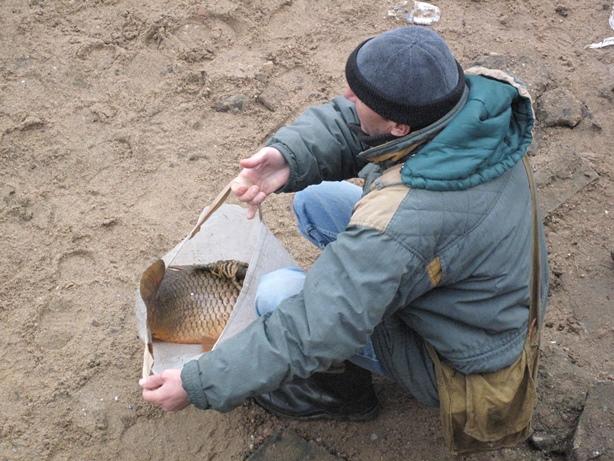 Были и такие, кому подфартило поймать крупную рыбу. Фото: Татьяна НЕКРАШЕВИЧ.