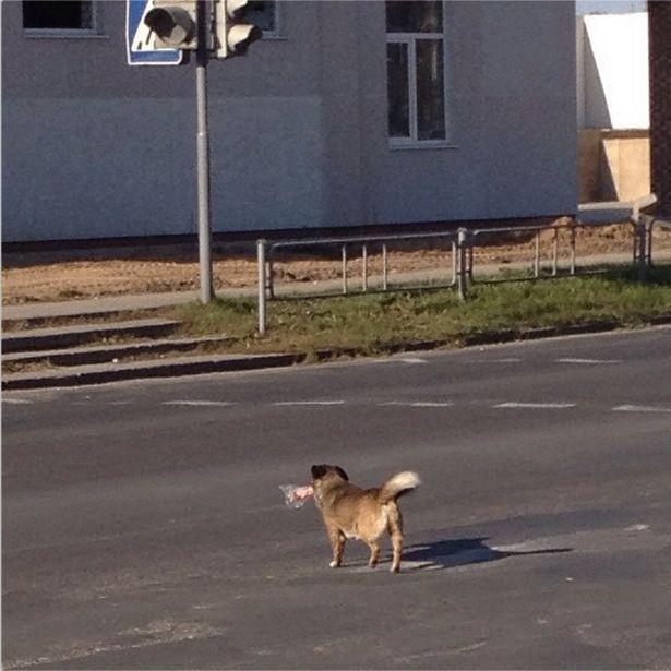 @konstantinabdullin Собака несет в зубах полпалки колбасы, причем в пакетике. Где она ее взяла, я даже не догадываюсь, но то, что она с ней сделает, я знаю :)