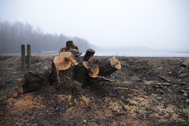 Береговая линия очищается от лишней растительности. Фото: Дмитрий МАКАРЕВИЧ