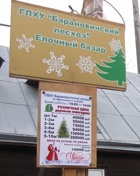 Новогодние деревья в этом году стоят от 45 тысяч до 498 тысяч рублей, в зависимости от высоты. Фото: Ольга ШИРОКОСТУП