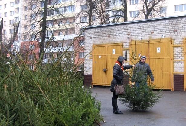В Барановичах начали работу елочные базары. Фото: Ольга ШИРОКОСТУП