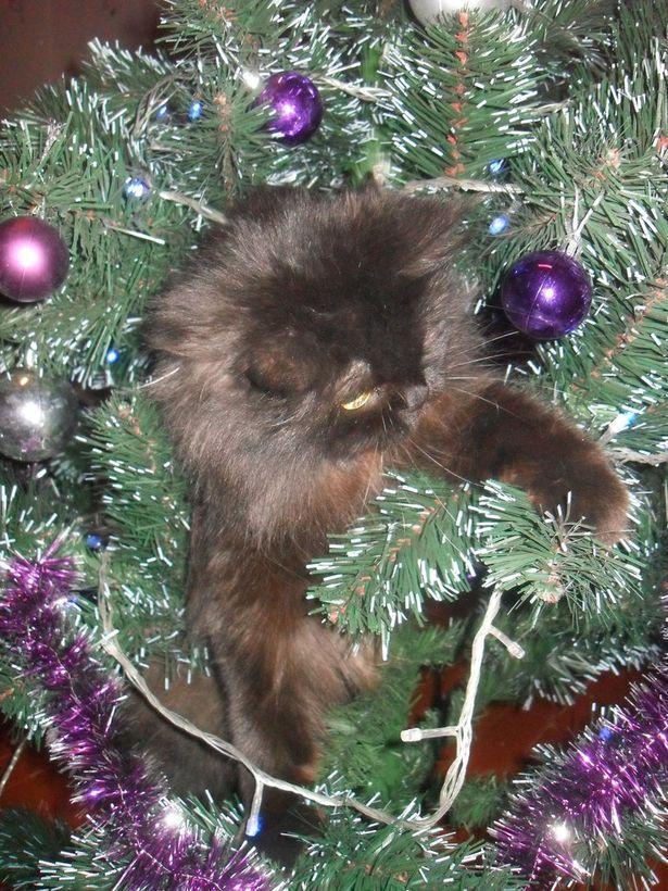 Любимая елочная  игрушка Снежаны Лукащук – кошка Нюша.