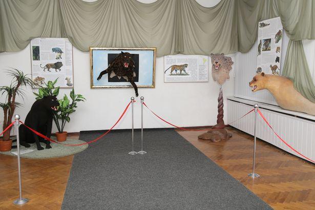 К каждому муляжу прилагается стенд, на котором можно узнать подробности об изображенном животном