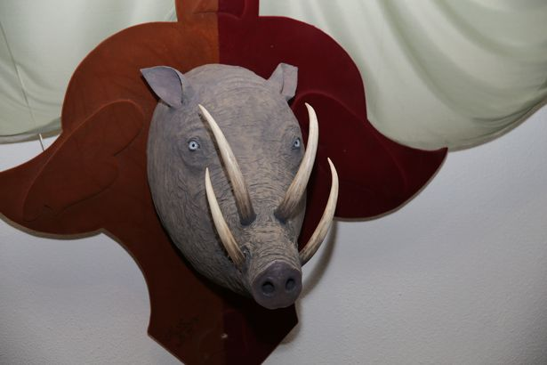 Бабирусса – представитель редкого вида семейства свиней