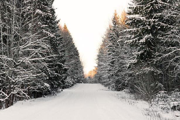 Зимний лес. Фото: Юрий ПИВОВАРЧИК
