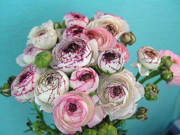 Цветы из холодного фарфора. Автор Полина Стрепетова. Фото из архива автора.
