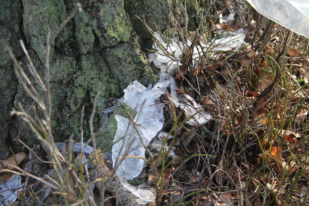 Заморозки превращают сок в лед. Фото: Александр ТРИПУТЬКО.