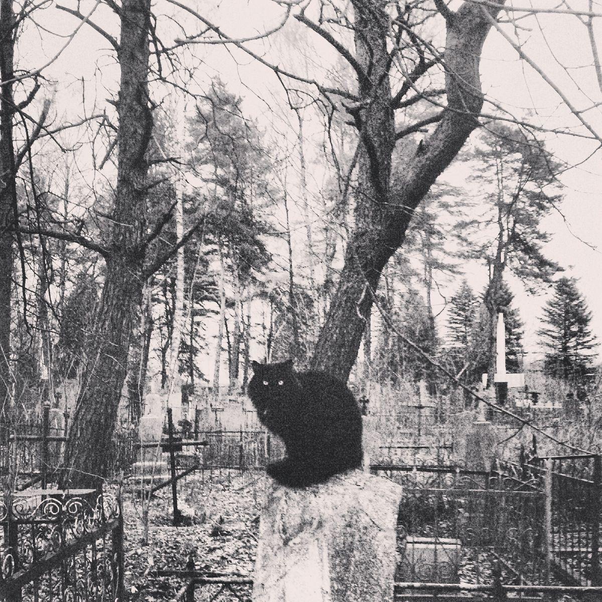 Черный кот на памятнике на кладбище на ул. Загородной. Фото: архив Валентина ДУДУКА