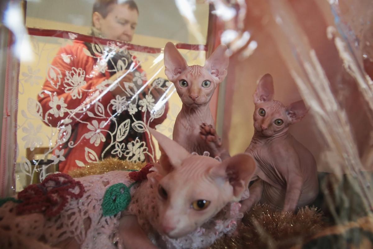 В Барановичах прошла выставка кошек.