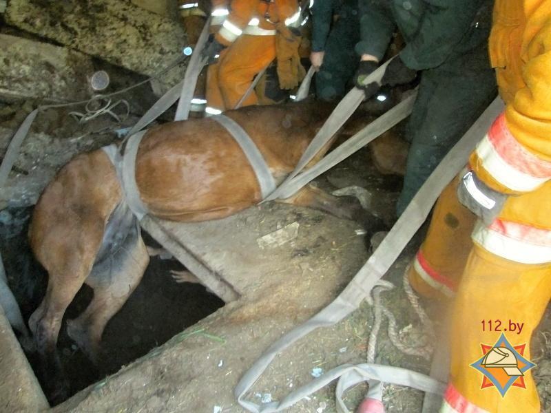Спасатели извлекли животное с помощью пожарных рукавов