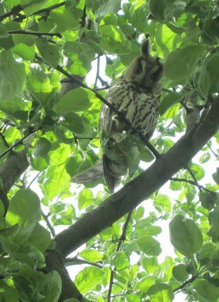 Птица с любопытством наблюдала за окружающими.  Фото семьи Микулик.