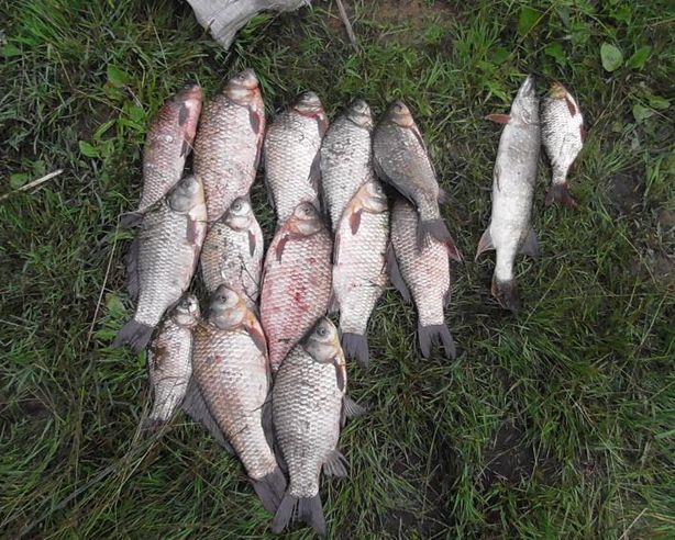 Улов браконьеров – 15 рыбок. Фото предоставлено Барановичской межрайонной инспекцией охраны животного и растительного мира при Президенте Республики Беларусь.
