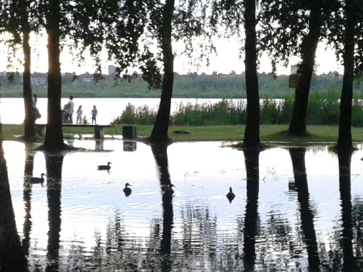 До урагана здесь была трава, а теперь плавают утки