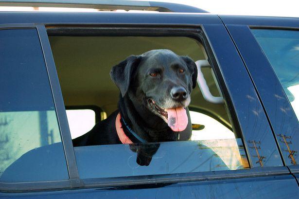 В жару не оставляйте в салоне автомобиля животных. Фото с сайта www.flickr.com