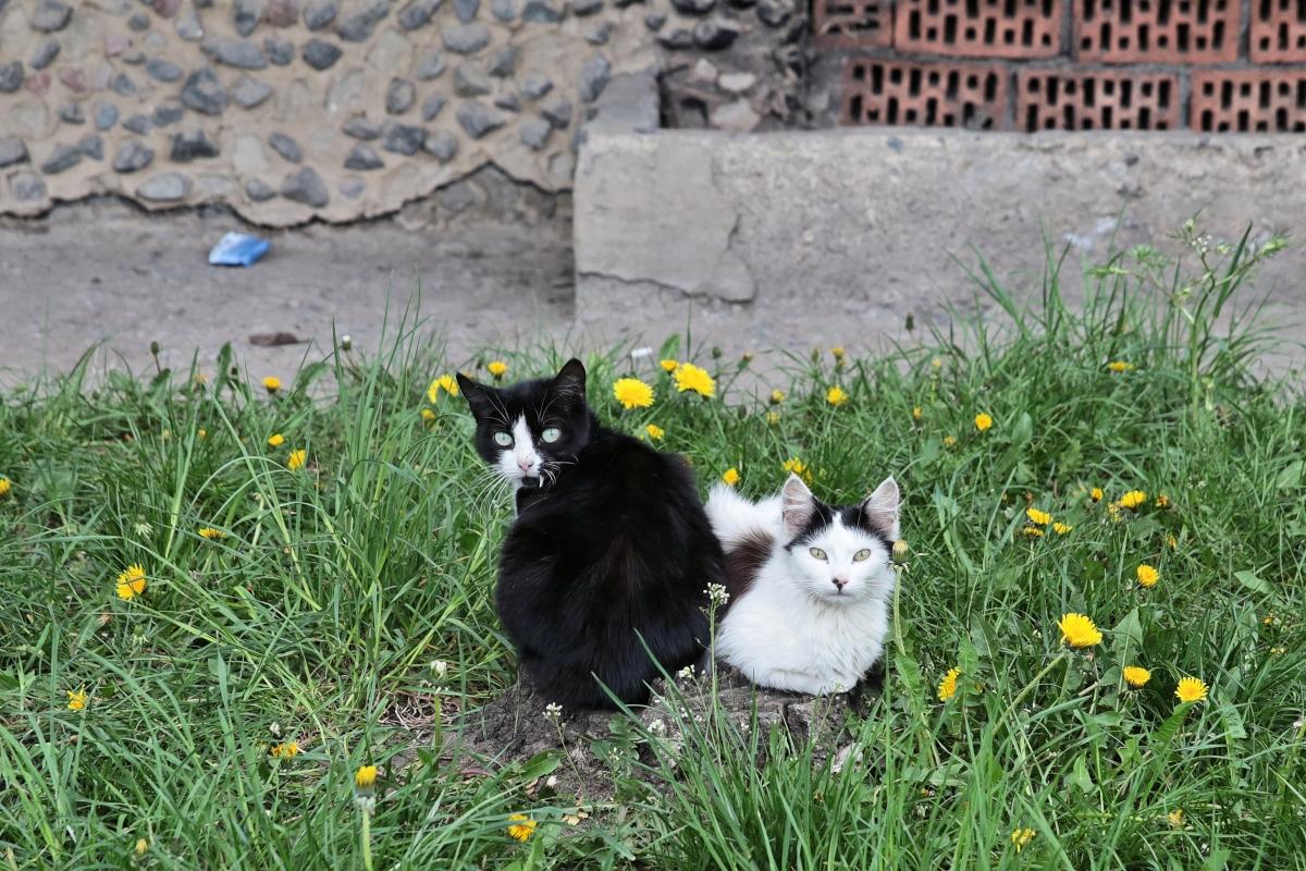 Кошки города Барановичи.