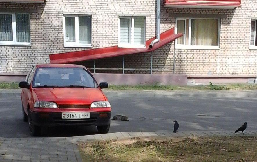 Эй, птичка, летим со мной... Фото: Елена ЛАПКОВСКАЯ