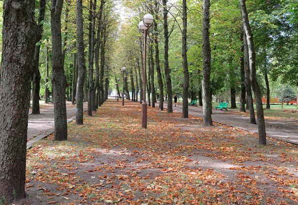 Осенняя листва в парке. Фото: Наталья СЕМЕНОВИЧ