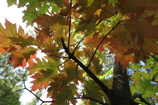 Осень в Барановичах. Фото: Наталья СЕМЕНОВИЧ