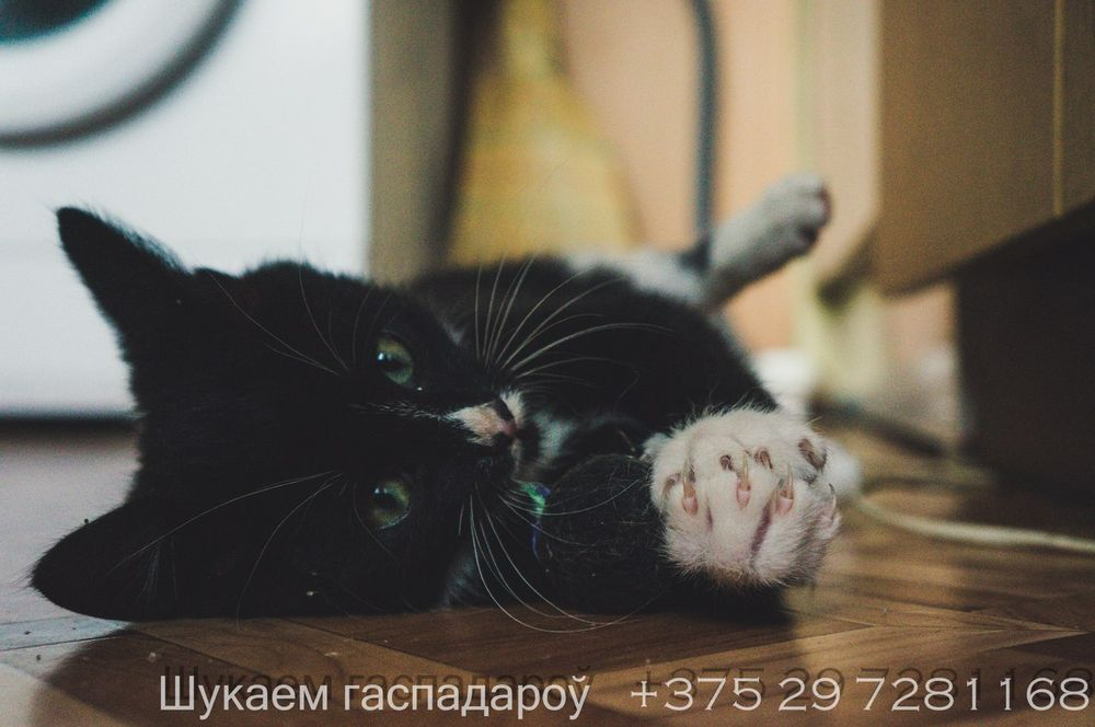 Фота: Зміцер КАРАЧУН