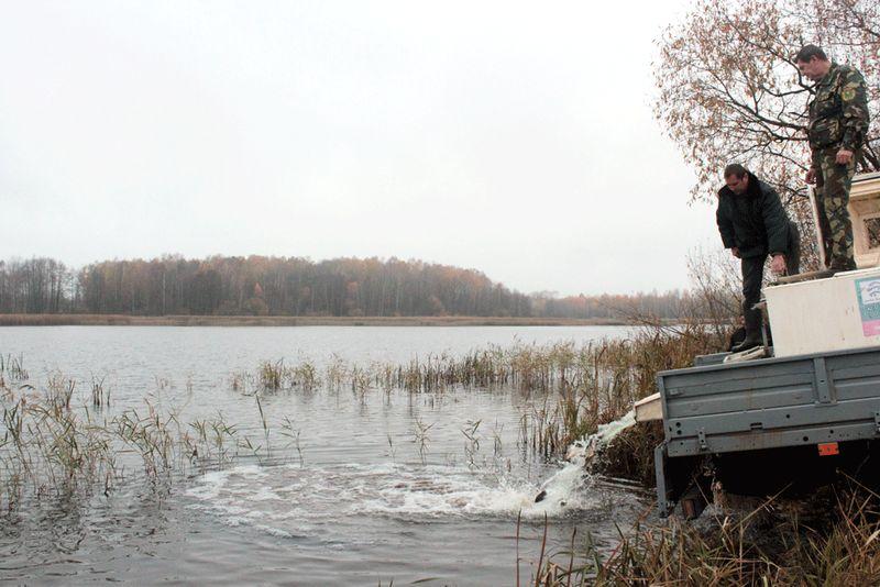 Специалисты считают осень наиболее удачным времнем года для зарыбления. Фото: Юрий ПИВОВАРЧИК.