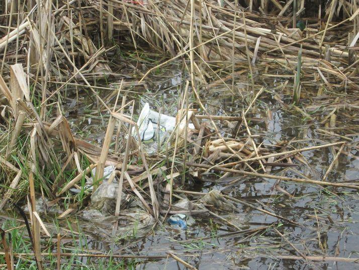 Особенно много мусора в воде. Фото: Татьяна НЕКРАШЕВИЧ.
