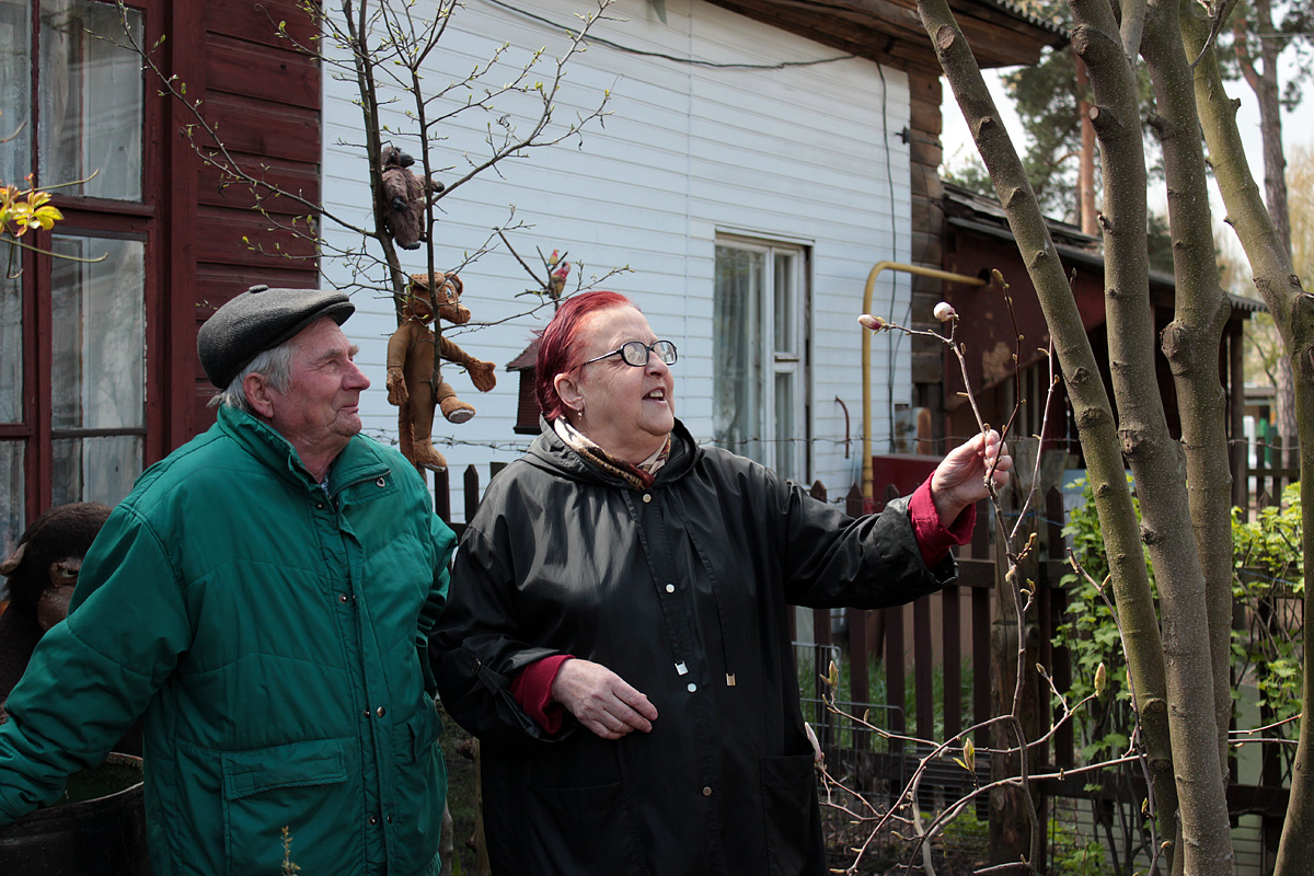 Магнолия 14 лет растет во дворе Юрия и Леониды Дребезовых