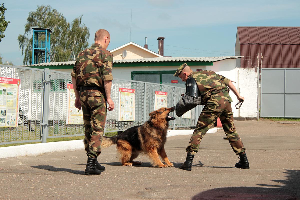 Служебный пес Граф проводит задержание. Фото: Юрий ПИВОВАРЧИК