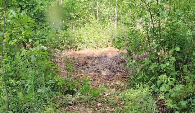 Место захоронения свиней. Фото: ganc-chas.by