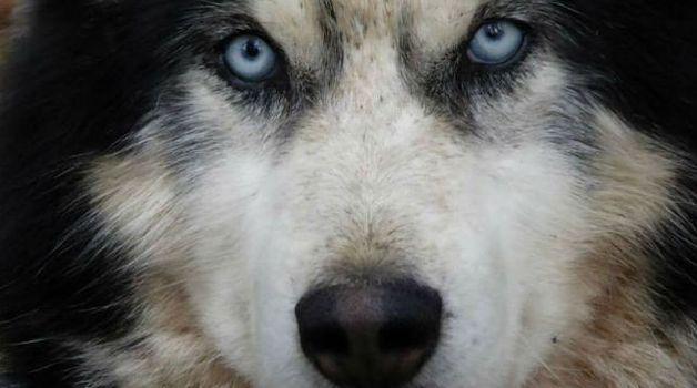 Результат экспертизы: погибший вМинске восьмимесячный ребенок скончался отнападения пса
