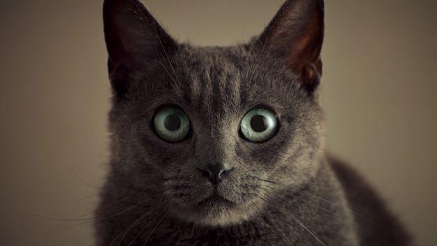 Видео секс котов