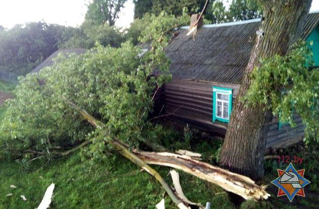 Последствия сильного ветра в Витебской области