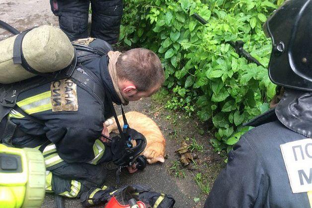 Пожарные спасают кота.