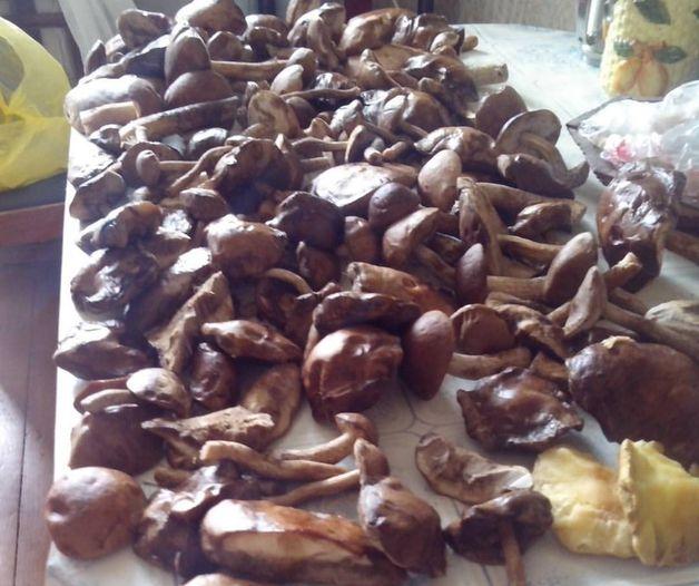 Урожай грибов семьи Некрашевич, собранный 22 июля. Фото: Татьяна НЕКРАШЕВИЧ