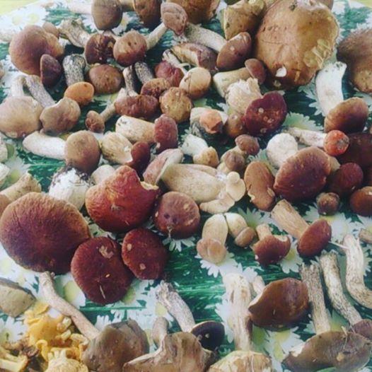 Белые грибы на утренней прогулке нашла горожанка Ирина Ивтушок. Фото: Ирина ИВТУШОК