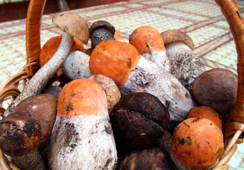 Что можно приготовить из грибов.