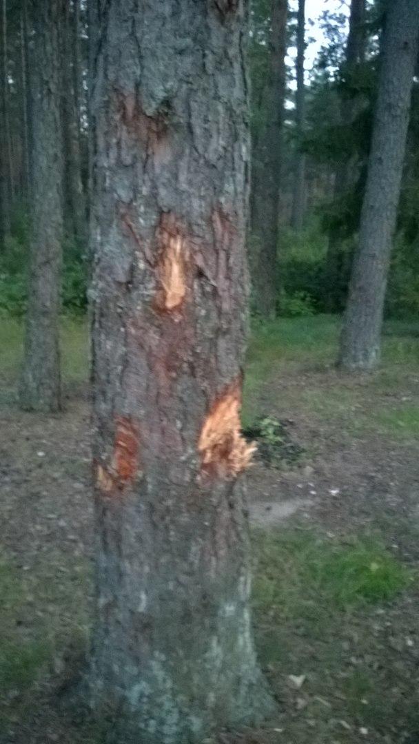 Последствия отдыха на природе.