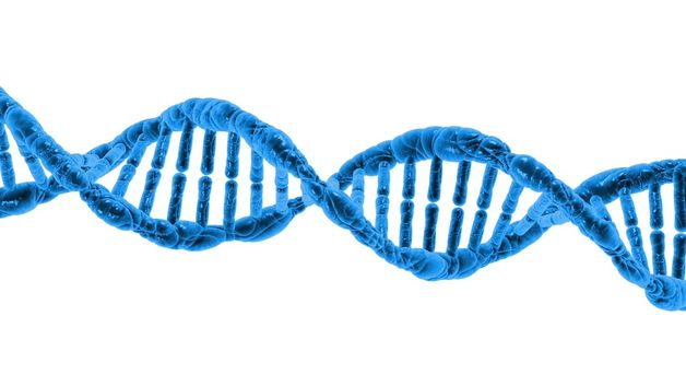 Жизнь человека можно программировать заблаговременно — Ученые