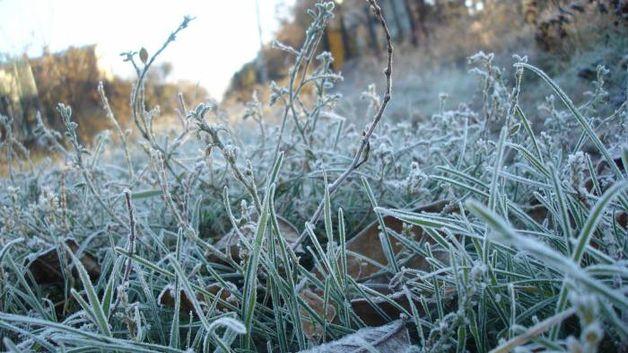 Winter iscoming: ночью навыходных заморозки до-3°C