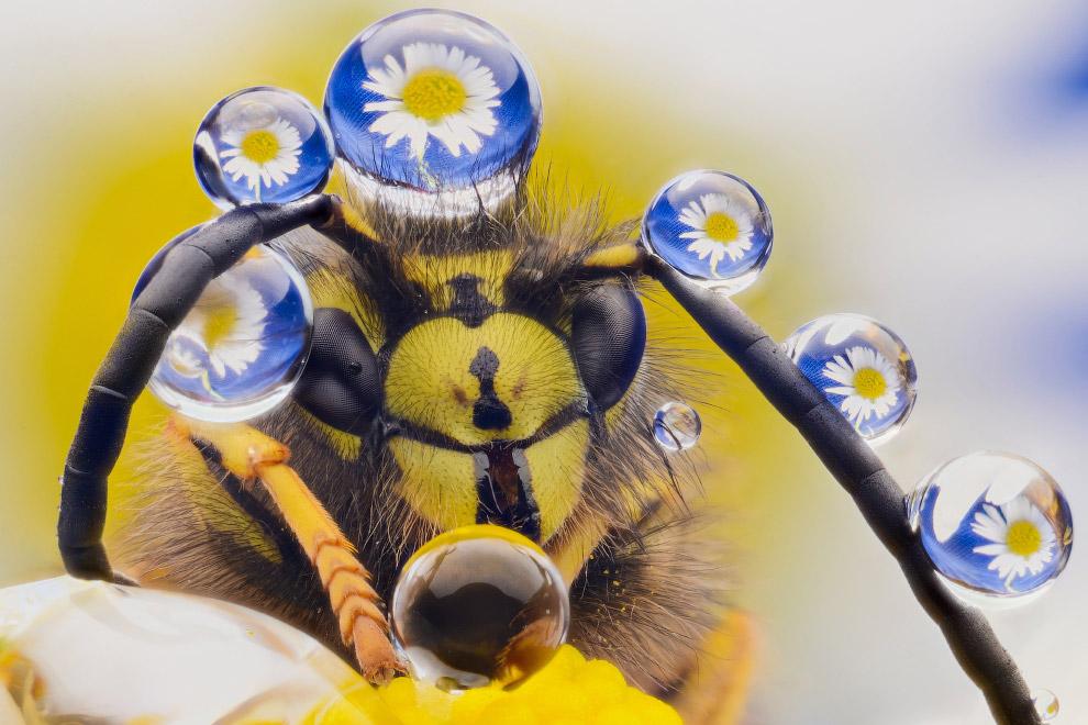 Позитивная пчела с украшениями из капель. Фото Murray Mcculloch