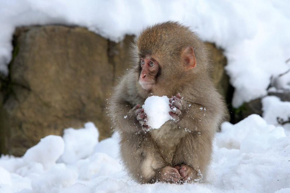 Поиграем в снежки? Фото de VAULX Nicolas