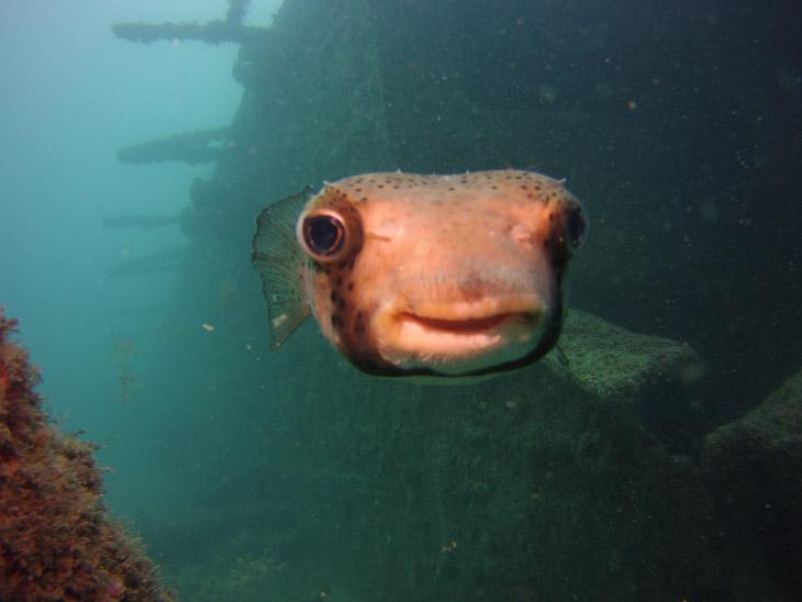 Счастливая рыба. Фото Craig Moore