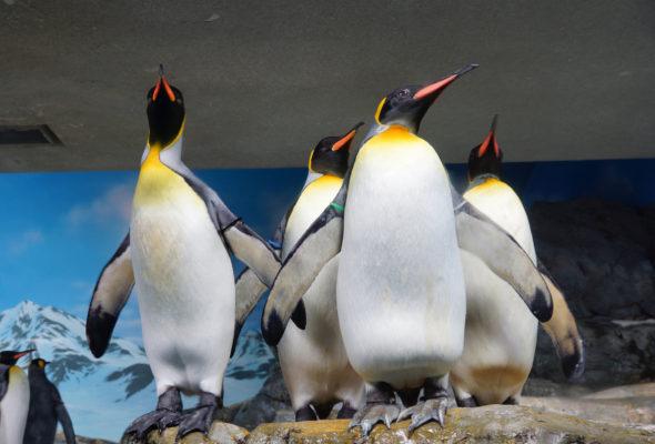 Пингвину, который облысел из-за болезни, сшили гидрокостюм