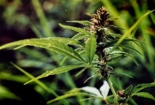 В Барановичах задержали «БМВ» с марихуаной