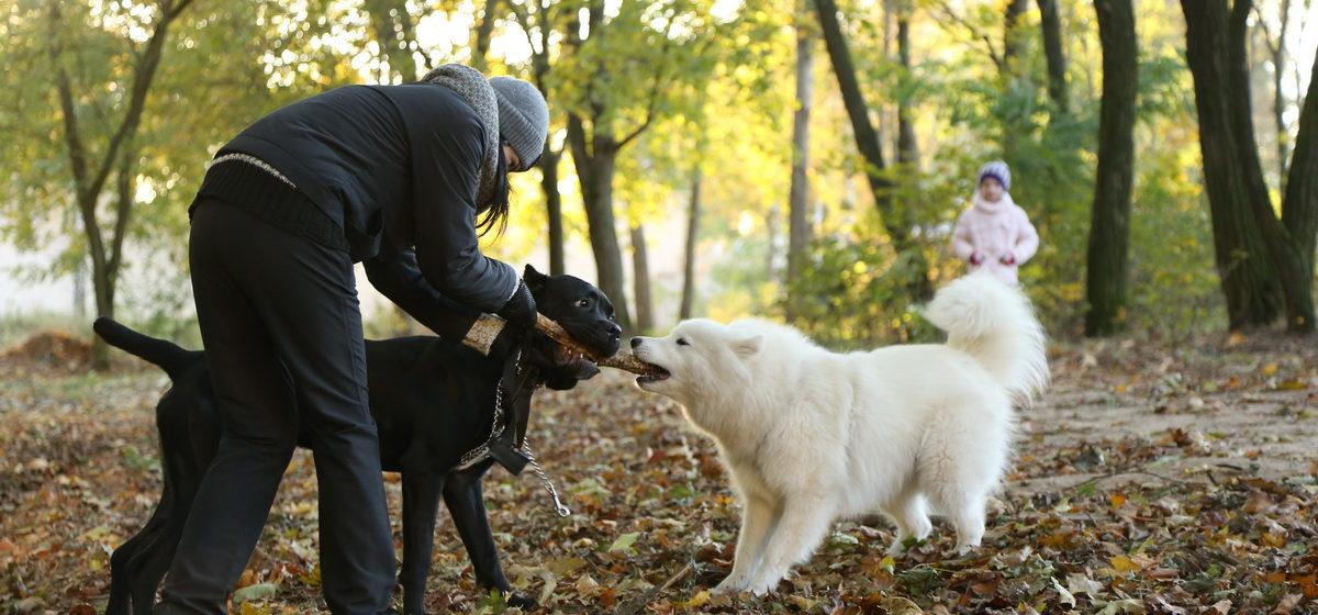 Спустить бы собак. Почему жители Барановичей не могут цивилизованно выгуливать питомцев